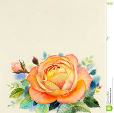 watercolor painting original realistic orange color flower of rose