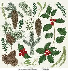 christmas plants vector set christmas plants botanical illustration stock vector