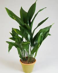 indestructible houseplants life and style the guardian