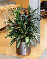 silk plants beautiful mixed dracaena silk floor plant arrangement at