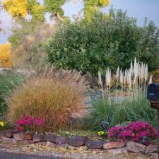Landscaping Albuquerque Nm by Baca U0027s Trees Tree Services 7933 Edith Blvd Ne Business