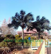 konda sale high quality artificial trees for home