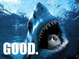 Grumpy Cat Meme Good - random grumpy cat meme by naomi89 on deviantart