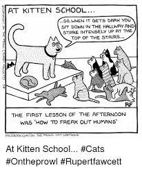 Cartoon Cat Memes - 25 best memes about school cat school cat memes