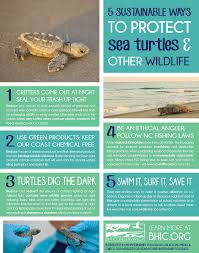 how to help protect sea turtles at home