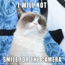 Grouchy Cat Meme - will not smile for the camera grumpycat tard tardarsauce grumpy