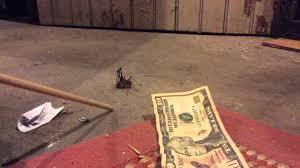 camelback cricket in my basement youtube