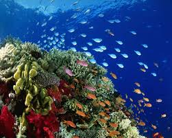 best 25 under the sea pictures ideas on pinterest underwater