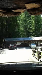 Chandelier Drive Through Tree Chandelier Drive Through Tree Leggett California Youtube