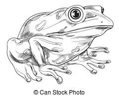 frog outline drawing images and stock photos 269 frog outline