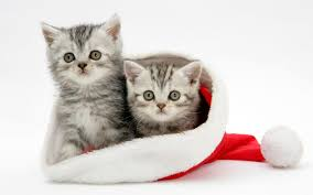 cute dog christmas wallpapers white cats christmas wallpaper for android jpg 1920 1200