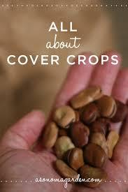 15 best cover crops for gardens images on pinterest vegetable