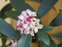 talking plants talking plants don u0027t snort the autumn winter sprinter daphne