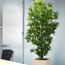 dracena reflexa drago green ila international semi natural plants