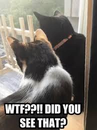 Omg Cat Meme - omg cats gifs tenor