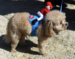 cute dog halloween costumes dog halloween costume parade packs in pups in new york city