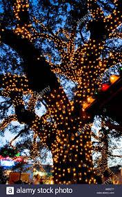 christmas lights on an oak tree found outside gueros taco bar in