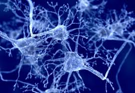 New technique negotiates neuron jungle to target source of Parkinson     s disease Imperial College London