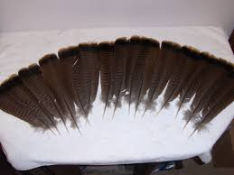 15 wild turkey feathers 11 13 inches in length w quills home