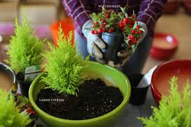 mini plants mini gardening whimsy for all ages how to u0026 inspriation