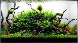 Japanese Aquascape by Aquadesign The Nature Aquarium Style Aquascape