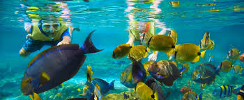 Hawaii Snorkeling images Rainbow reef snorkeling aulani hawaii resort spa jpg
