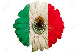 Stock Feather Flags Gerbera Daisy Flower In Colors National Flag Of Mexico On White