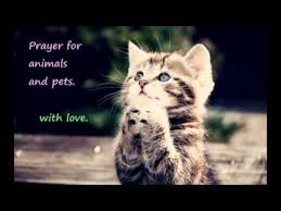 pet prayer prayer for cats dogs and other pets and animals