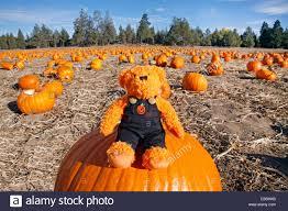 Halloween Costumes Teddy Bear Teddy Bear Dressed Halloween Costume Pumpkin
