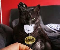 Batman Face Meme - batman face cat comics and memes