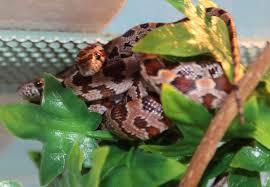 Plz Bad Segeberg Reptilien Tieranzeigen