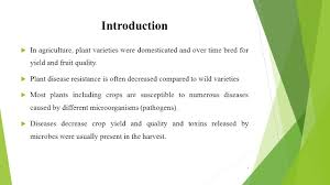 Plant Diseases Caused By Microorganisms - 100 plant diseases caused by bacteria the confounding