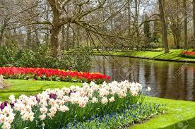 beautiful spring flowers in keukenhof park in netherlands holland