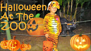 animals halloween halloween at the zoo animal show milking cow learn animals for
