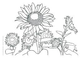 coloring page for van sunflower coloring page coloring pages van sunflower colouring kids