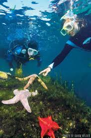 California snorkeling images World 39 s best dives best places for kids and teens sport diver jpg