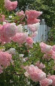 Summer Flower Garden Ideas - best 25 full sun garden ideas on pinterest sun garden full sun