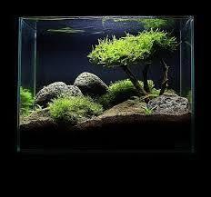 Aquascape Tree Java Moss How To Grow Carpets Walls Trees And More Aquascape