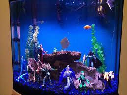 122 best pets here fishy fishy images on aquarium