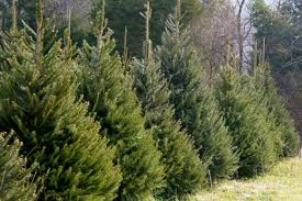 trees for sale in st cloud and central minnesota