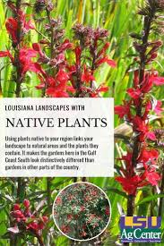mail order native plants 426 best lawn u0026 garden images on pinterest lawn lsu and louisiana