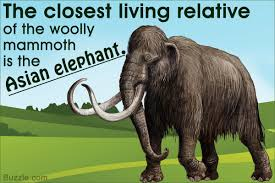 16 fascinating facts woolly mammoths u0027ll blow