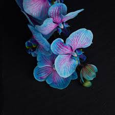 blue and purple orchids 7 stunning orchids to brighten up your home