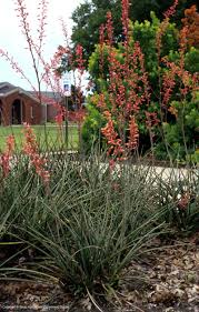 new mexico native plants texas native plants database
