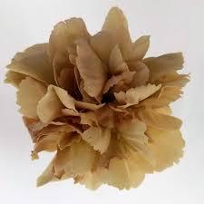 carnation caramel antique