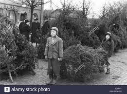 selling trees in the square of trelleborg sweden 1950s