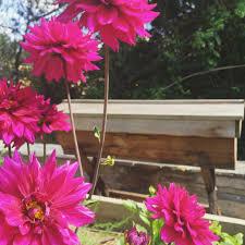 native brazilian plants beekeeping like a top 10 bee friendly flowers