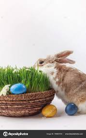 rabbit easter basket rabbit easter basket grass eggs easter concept stock photo