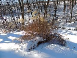 bonnie u0027s garden in pennsylvania in winter fine gardening