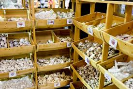 Where To Buy Seashells Review Shell Factory U0026 Nature Park Where To Buy Shells And Gifts